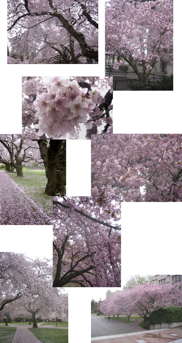 pretty blossoms